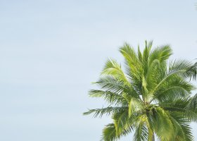 maledivy-hotel-royal-island-resort-spa-101.jpg